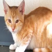 Adopt A Pet :: Petunia - Manteo, NC