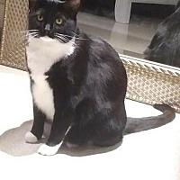 Adopt A Pet :: Greta - Royal Palm Beach, FL