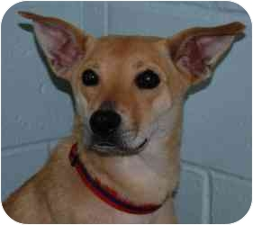 Labrador Retriever Mix Dog for adoption in Vineland, New Jersey - Maria