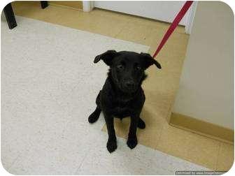 Labrador Retriever Mix Dog for adoption in Morden, Manitoba - Lucy