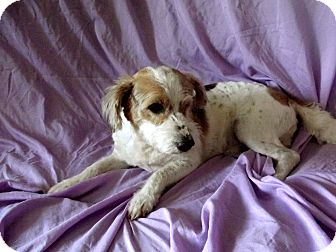 Terrier (Unknown Type, Small) Mix Dog for adoption in Salem, New Hampshire - BO-BO