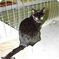 Adopt A Pet :: Hercules - Mission, BC