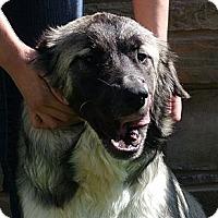 Adopt A Pet :: Kamila - white settlment, TX
