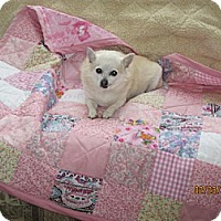 Adopt A Pet :: GIGI - Mt Gretna, PA