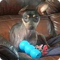 Adopt A Pet :: Ebony - Nashville, TN