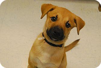 Shepherd (Unknown Type) Mix Puppy for adoption in Twin Falls, Idaho - Hobbs