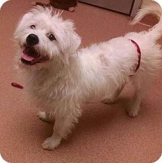 Terrier (Unknown Type, Medium) Mix Dog for adoption in Columbus, Georgia - Mambo 2987