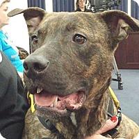 Adopt A Pet :: Rocky - Georgetown, KY
