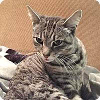 Adopt A Pet :: Madame Zulu - Davis, CA