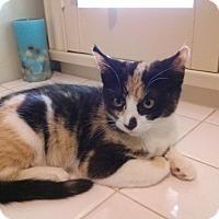 Adopt A Pet :: Brandi - Pasadena, CA