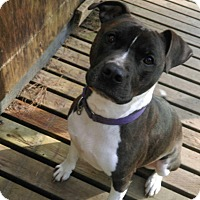Adopt A Pet :: Diva - Kingston, WA