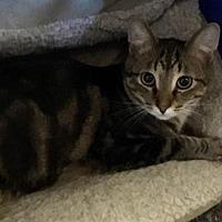 Adopt A Pet :: Cashew - Neenah, WI