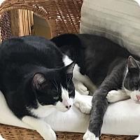 Adopt A Pet :: Toni and Tanya - Bear, DE