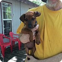 Adopt A Pet :: Simone - Fair Oaks Ranch, TX