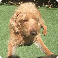 Adopt A Pet :: Julian - orange, CA