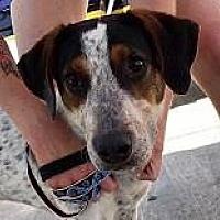 Adopt A Pet :: Fargo - DeSoto, IA