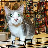 Adopt A Pet :: Tomorrow - Rochester, MN