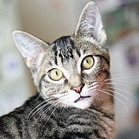 Adopt A Pet :: Mizzle - Pacific Grove, CA