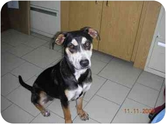 German Shepherd Dog Mix Dog for adoption in Houston, Texas - Maya