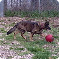 Adopt A Pet :: Jayda - Geneseo, IL