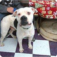 Adopt A Pet :: Bushy - Alliance, NE
