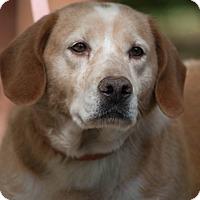 Adopt A Pet :: Lola - Salem, MA