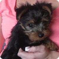 Adopt A Pet :: Huckleberry - Greenville, RI