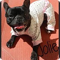 Adopt A Pet :: Jolie - Escondido, CA