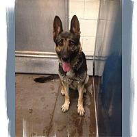 Adopt A Pet :: Kiera. COURTESY POSTING - Phoenix, AZ