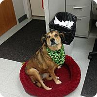 Adopt A Pet :: COCO - Sandusky, OH