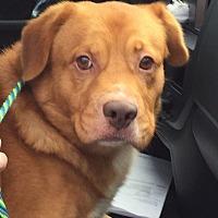 Adopt A Pet :: Ben - Roswell, GA