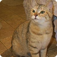 Adopt A Pet :: Clover - Bedford, VA