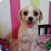 Adopt A Pet :: Emily - Crump, TN