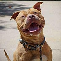 Adopt A Pet :: DANTE - Aurora, IL
