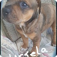 Adopt A Pet :: Ursula ready 7/13/17 - Palm Bay, FL