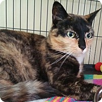 Adopt A Pet :: Lucy - Templeton, MA