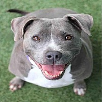 Adopt A Pet :: SSIZZY - Los Angeles, CA