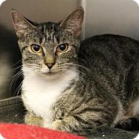 Adopt A Pet :: Monday - Richmond, VA
