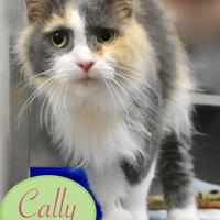 Adopt A Pet :: Cally - Port Hope, ON