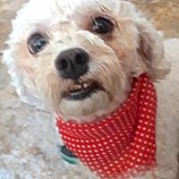 Adopt A Pet :: Chardonnay - San Diego, CA