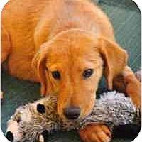 Adopt A Pet :: Pumpkin - Scottsdale, AZ
