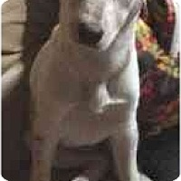 Adopt A Pet :: Diamond - League City, TX