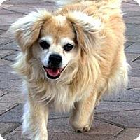 Adopt A Pet :: Sampo - Torrance, CA