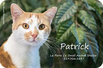 Domestic Shorthair Cat for adoption in La Porte, Indiana - Patrick