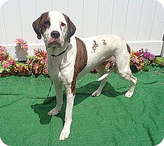 Hound (Unknown Type) Mix Dog for adoption in Lebanon, Maine - Arnold-LOCAL