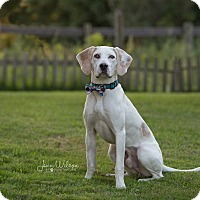 Adopt A Pet :: Cameron - Drumbo, ON