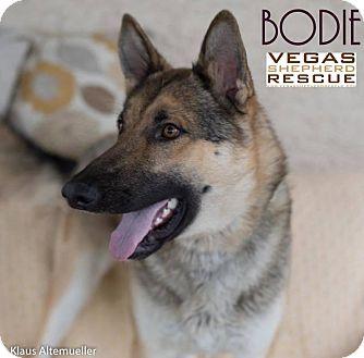 German Shepherd Dog Dog for adoption in Las Vegas, Nevada - Bodie