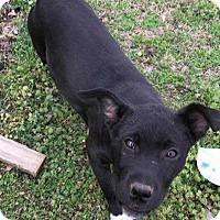 Adopt A Pet :: RaBerta - McCurtain, OK