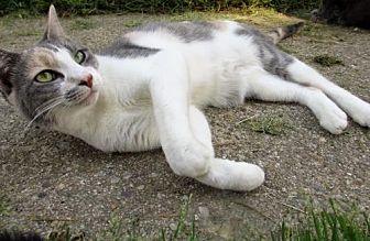 Calico Cat for adoption in Colonial Beach, Virginia - Raine