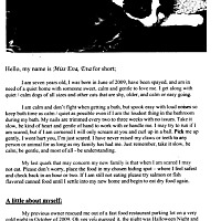Adopt A Pet :: MS. EVA - Glendale, AZ